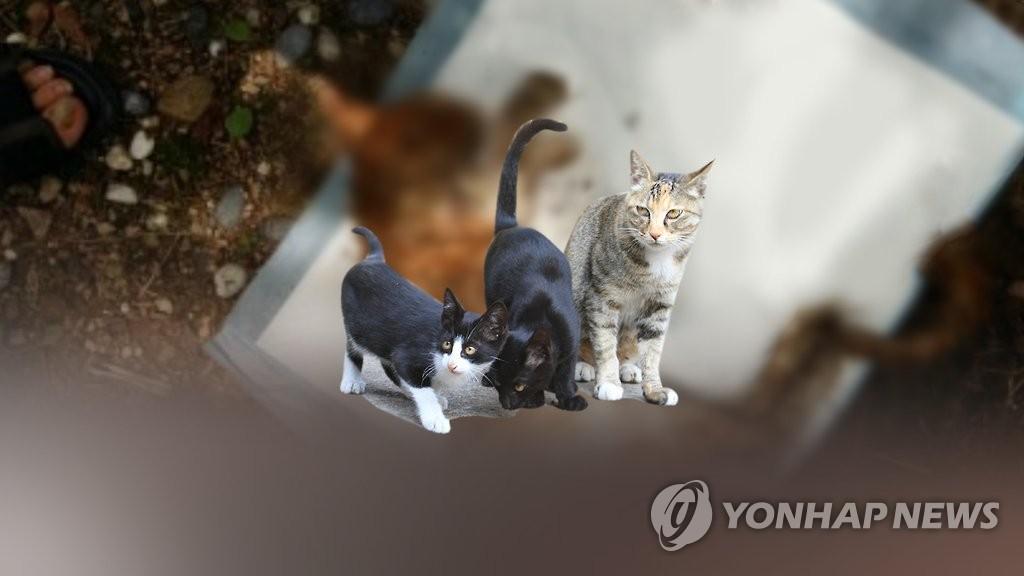 """靑 """"동물학대 범위 확대 검토…처벌도 강화"""""""