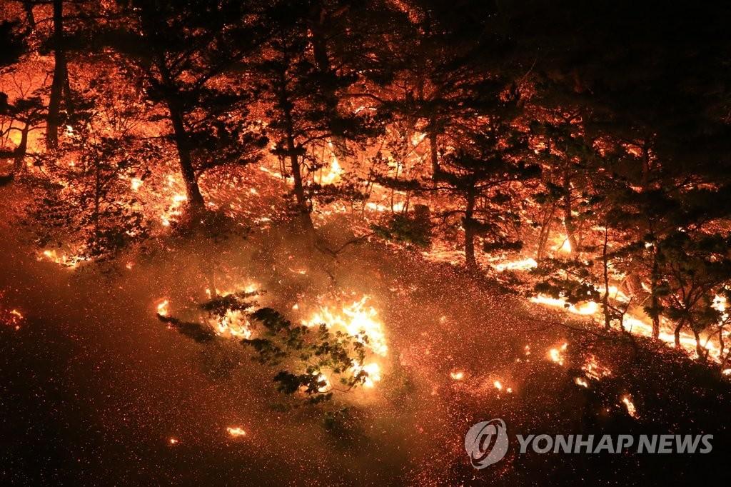동해안 산불 주범 '양간지풍' 무력화…'불쏘시개' 미리 없앤다