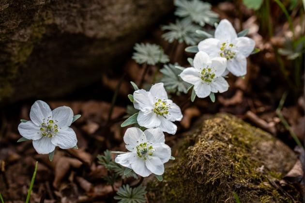 안산시, 봄이 오는 길목의 풍도에 야생화 만발...'울긋불긋 야생꽃으로 섬 전체가 장관'