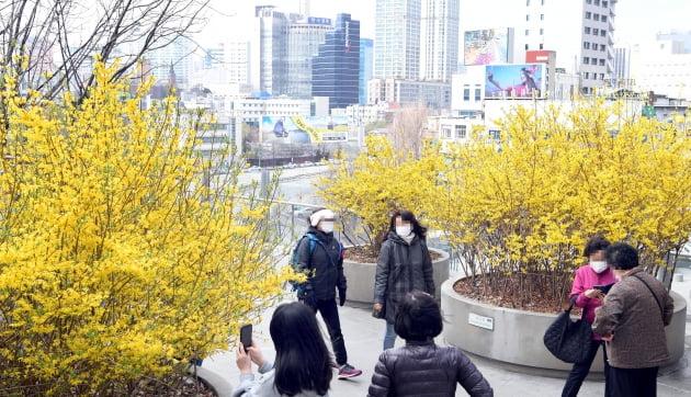 서울로7017에 활짝핀 봄꽃