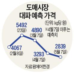 한 단 8000원 '金대파'…두달뒤 40% 떨어진다