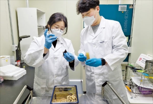 한국원자력연구원 연구진이 식용곤충으로부터 항암면역 성분을 추출하는 작업을 하고 있다.   한국원자력연구원 제공