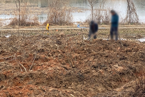 """[르포] """"여기는 날마다 식목일""""…광주 산정지구도 곳곳에 급조된 묘목밭(종합)"""