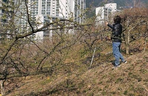강기윤 의원 땅, 감나무 6천만원 과다보상…창원시 환수하기로
