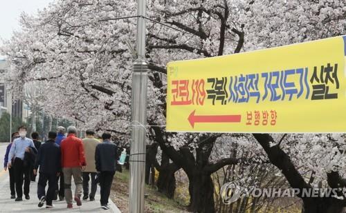 """""""마스크 벗고 사진 찰칵"""" 청주 무심천 벚꽃길 방역 '불안불안'"""