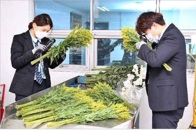 """수입 화훼류 특별점검 내달 시행…""""해외 병해충 유입 차단"""""""