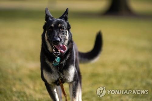 """미 '퍼스트독' 또 보안요원 물어…바이든 """"우리 개는 착해"""""""