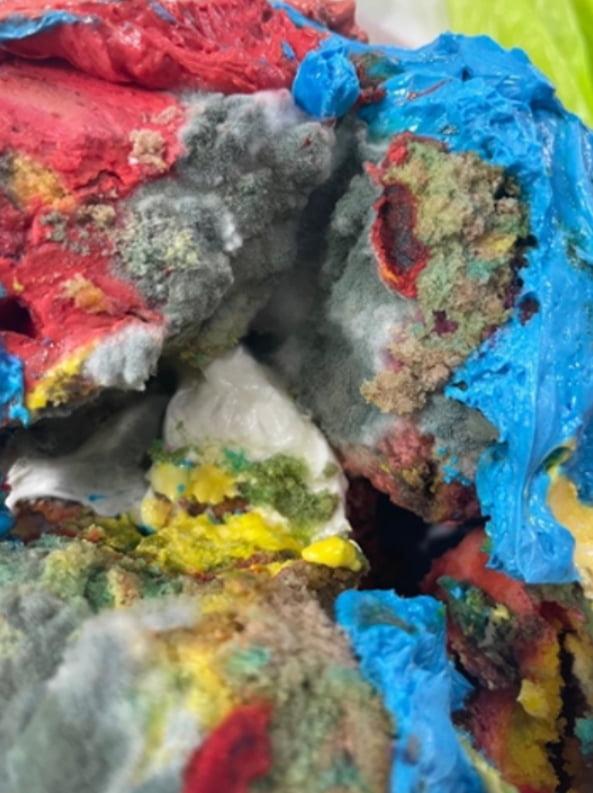 사진=온라인 커뮤니티에 올라온 곰팡이 낀 '솔비 케이크'