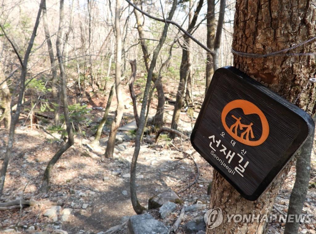 오대산국립공원 '깨달음을 찾아 떠나는 선재길' 전 구간 개방