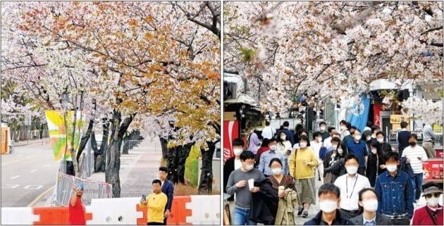 < 여의서로 통제하자…반대편에 몰린 사람들 > 서울의 대표적 벚꽃 명소인 여의서로 벚꽃길(왼쪽 사진)의 출입이 코로나19 확산을 막기 위해 2일 통제됐다. 그러자 서울 영등포구 여의나루역 인근 도로(오른쪽 사진)가 상춘객들로 인산인해를 이뤘다. 허문찬 기자 sweat@hankyung.com