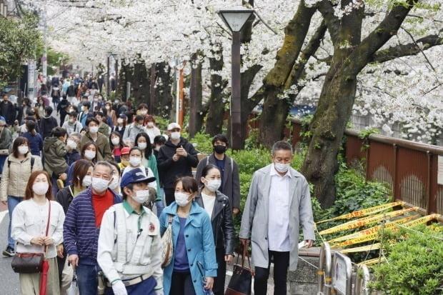 일본 시민들이 벚꽃 구경을 하는 모습/사진=연합뉴스