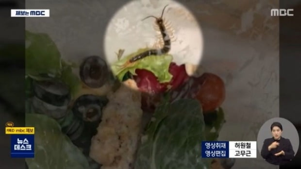 커피전문점 스타벅스에서 판매하는 샐러드에서 지네가 나온 것으로 알려져 소비자들의 공분을 사고 있다./사진=MBC 뉴스화면 캡처