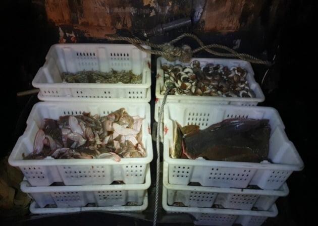 중국 불법조업 어선을 나포해 압류한 어획물. 중부해경청 제공