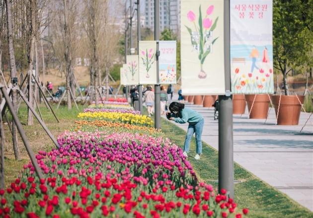 가는 길목마다 '튤립 잔치'…서울식물원 봄꽃 전시 개최