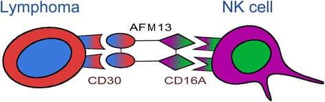 독일 제약사 어피메드의 'AFM13'의 구조. 호지킨 림프종 환자의 비정상 림프구에서 발현하는 CD30과 NK세포를 연결하는 이중항체를 이용해 종양을 제거하는 원리다.(사진 Journal of Hematology & Oncology)