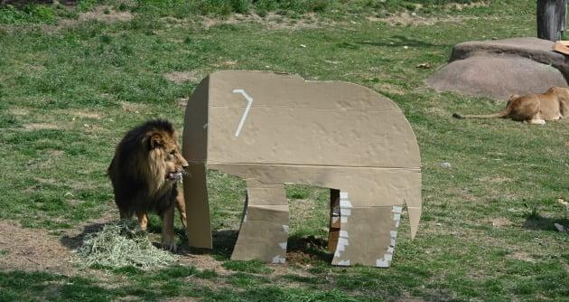 사자 놀이도구로 재활용된 LG전자 제품 포장상자 [사진=LG전자 제공]