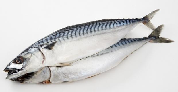 국민 생선 고등어를 부담 없는 가격에!
