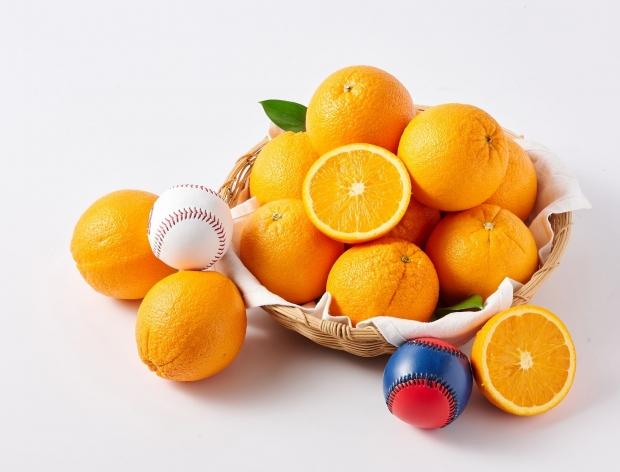 야구공보다 크고 당도도 높은 '자이언트 오렌지'