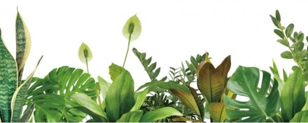 힐링 한 잎…초록과 함께라면, 모두의 삶은 예술이 된다