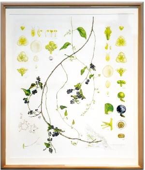 """""""식물 연구, 그림으로 그려…예술적 가치도 인정받았죠"""""""
