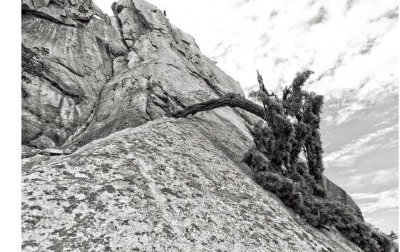 연약해도 쓰러지지 않는 소나무…그분들을 찍기 위해 난, 산으로 간다
