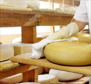 대한민국 치즈산업 1번지 '임실N치즈'