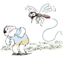 [생활속의 건강이야기] 모기로 전파되는 질병