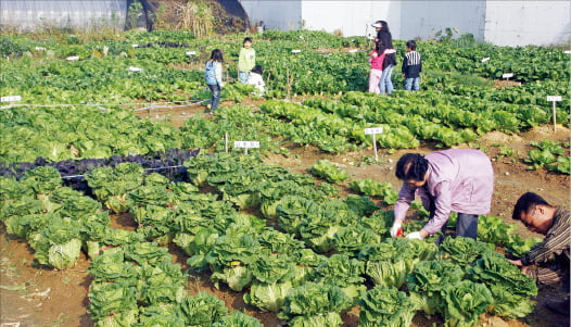 [시사이슈 찬반토론] 투기 억제위해 주말농장 투자까지 규제해야 하나