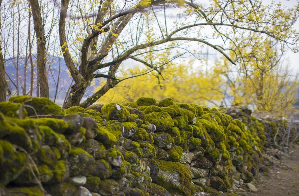 [여기 어때] 三大三美 그리고 三色…구례의 봄