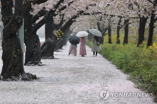 전북 오후까지 최대 30㎜ 비 …서해안 짙은 안개