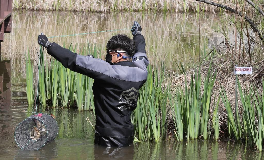 두꺼비 자취감추는 청주 생태공원…이번엔 미국가재 출몰 '비상'