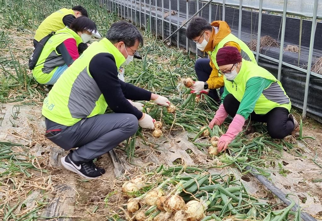 전남농협, 인력수급 어려움 농촌 일손돕기 구슬땀