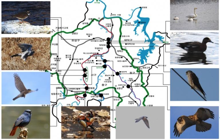 팔색조·칡부엉이…대전에 법적보호종 27종 포함 156종 서식