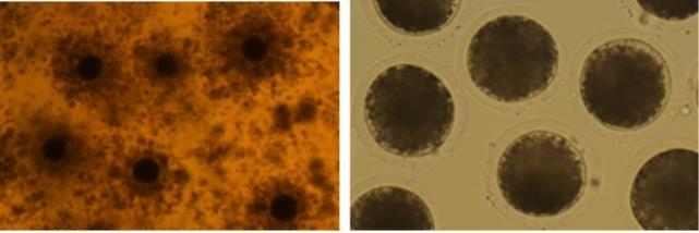 """엠케이바이오텍 """"단백질 제제 피하주사 기술, 생식세포에 안전"""""""