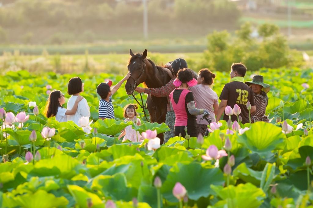 한국마사회, 말이 필요한 기관 대상 말 무상기증 신청 받는다