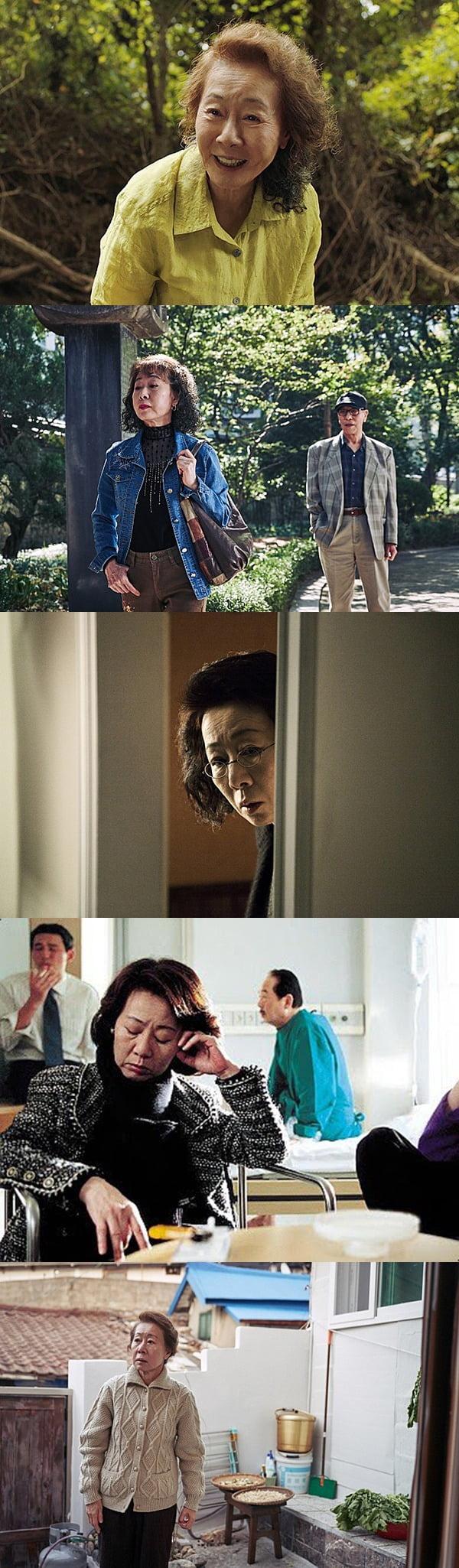 영화 '미나리'(위부터 차례로), '죽여주는 여자', '하녀', '바람난 가족', '찬실이는 복도 많지'의 윤여정. / 사진제공=각 영화 배급사