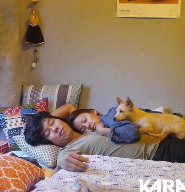 /사진=동물권행동 카라(KARA) 공식 인스타그램