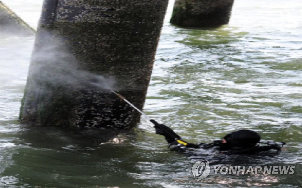'해파리 유생부터 뿌리 뽑는다'…해수부, 제거작업 착수