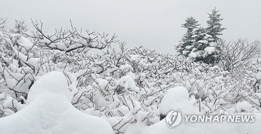 일요일 아침까지 전국 가끔 비…강원 산지는 눈 쌓일 수도