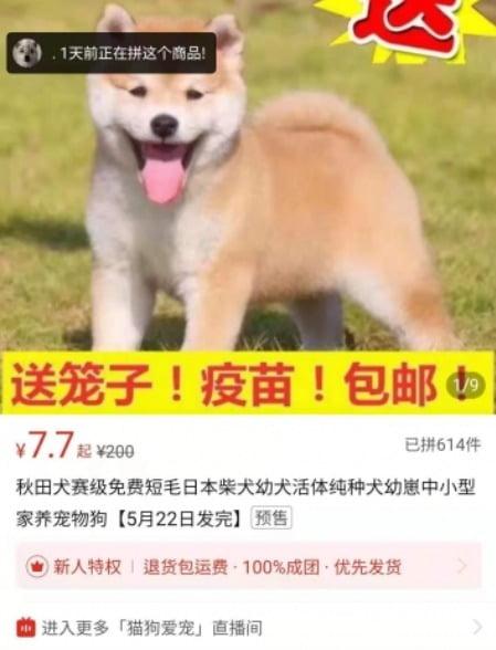 중국의 한 온라인쇼핑몰에서 올라온 개 판매 광고