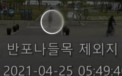"""'한강 의대생' 친구 찍힌 CCTV 공개 """"누군가 찾다 주저앉아"""" [종합]"""