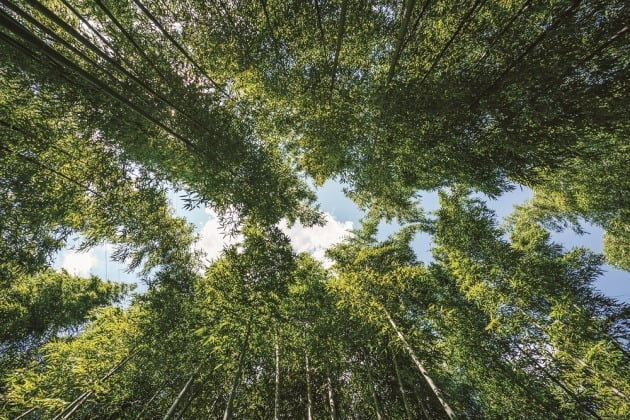 전남 구례 섬진강 대나무 숲길