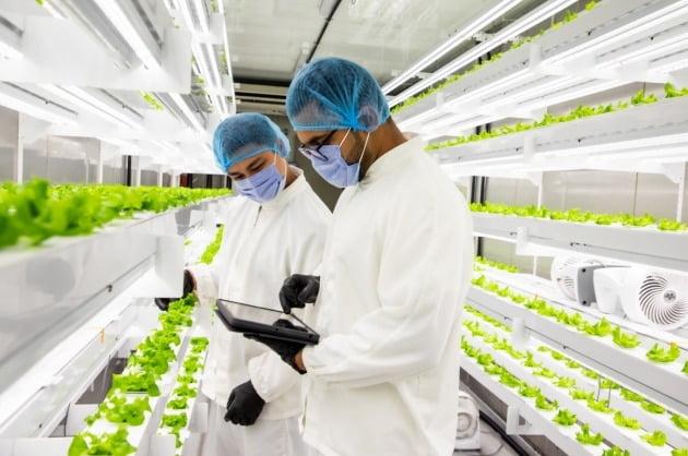 △아부다비의 큐브에서 현지 작업자들이 엔씽 OS로 농장환경을 점검하고 있다.