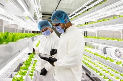푸드테크 엔씽, 아랍에미리트에 300만 달러 규모 수직농장 본격 진출