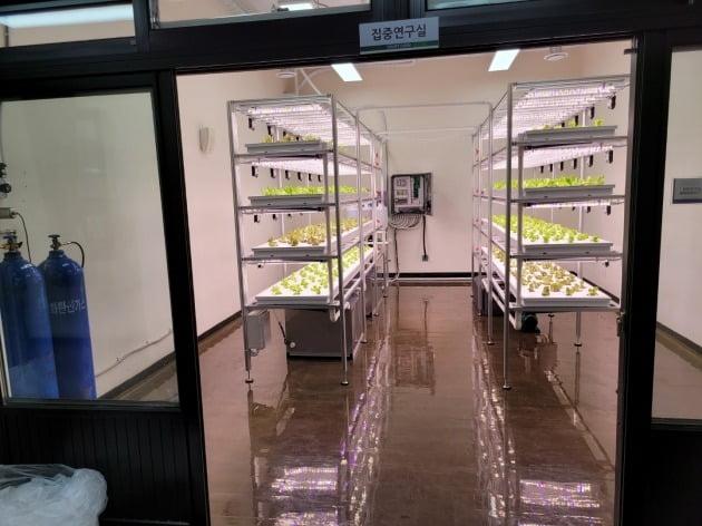 제주 서귀포산업과학고등학교에 농업회사법인 에스팜에서 설치 운영중인 스마트팜 실내농장.