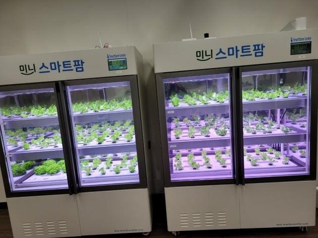 서귀포산업과학고등학교 학생들이 직접 운영중인 미니식물공장.