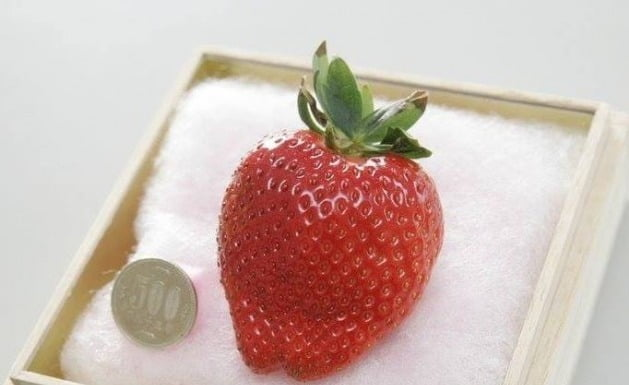 딸기 한 알 56만원…명품 과일 천국 日