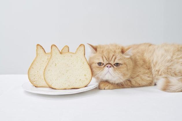 [JAPAN NOW] 나만의 코디 '고양이 식빵' 인기