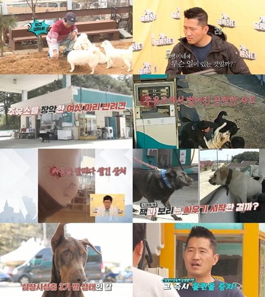 개훌륭(사진=KBS2 '개는 훌륭하다')