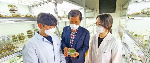 한국생명공학연구원 식물시스템공학연구센터는 척박한 농업 환경에서도 잘 자라는 고구마 개량 연구를 하고 있다. 곽상수 책임연구원(가운데)이 고구마를 살펴보고 있다. 한국생명공학연구원 제공
